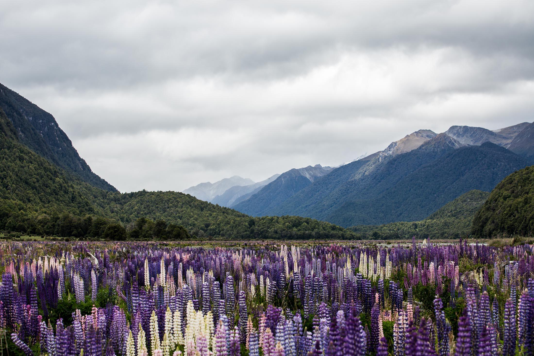 KATHMANDU NZ 2