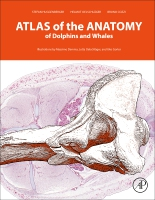 An Interactive Atlas of the Anatomy of Dolphins