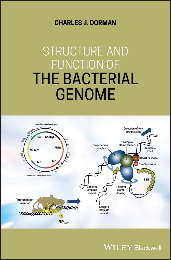 Structure and Function of the Bacterial Genome
