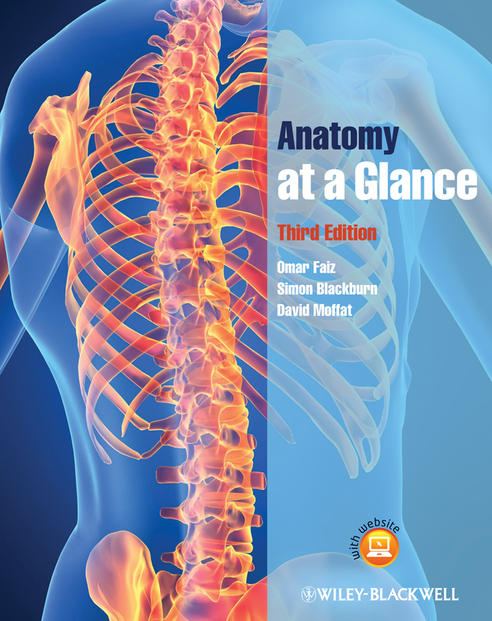 Anatomy at a Glance