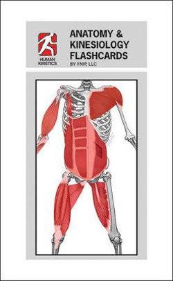 Anatomy and Kinesiology Flashcards