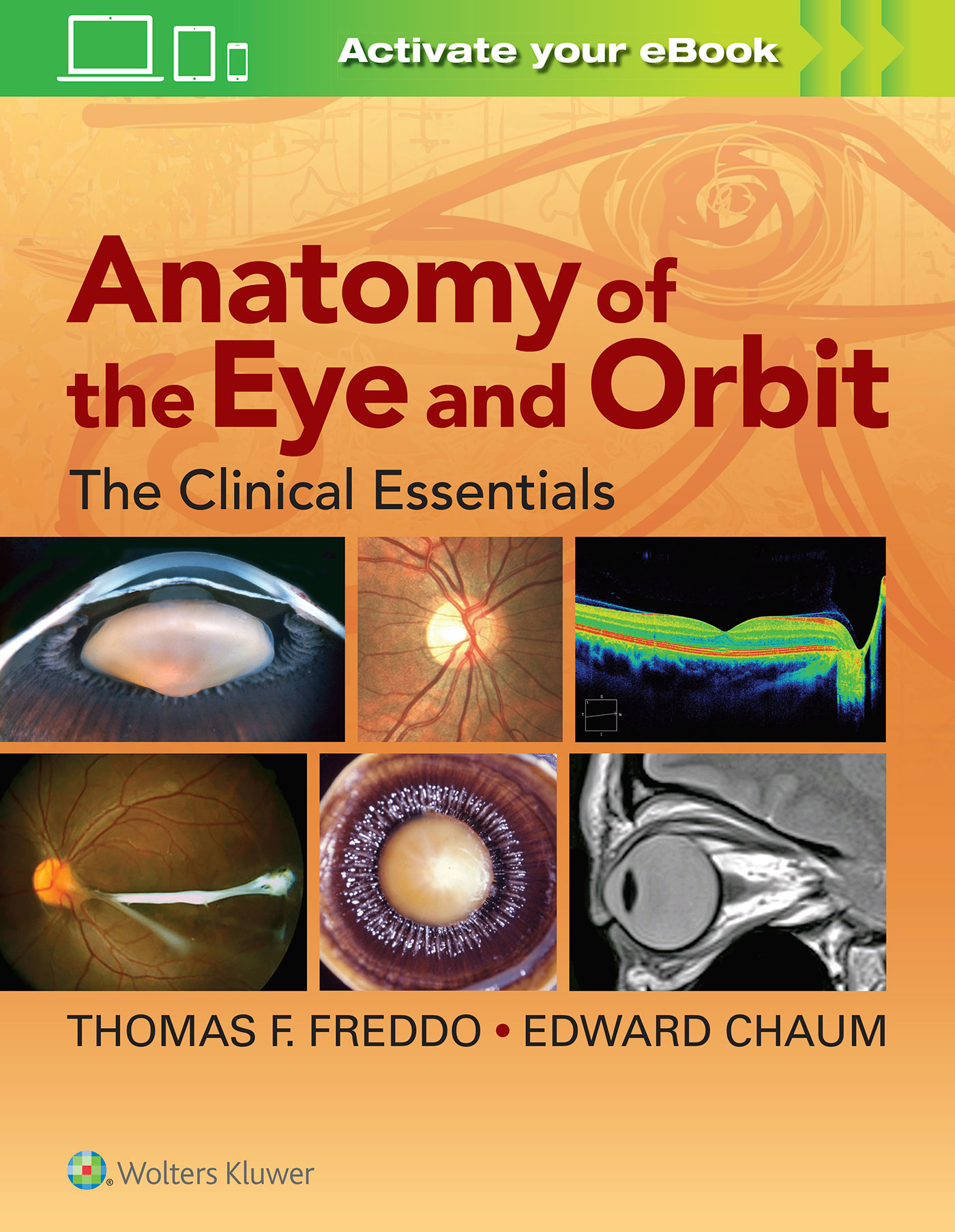 Anatomy of the Eye and Orbit