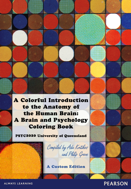 A Colorful Introduction to the Anatomy of the Human Brain: A Brain and Psychology Coloring Book (Custom Edition)
