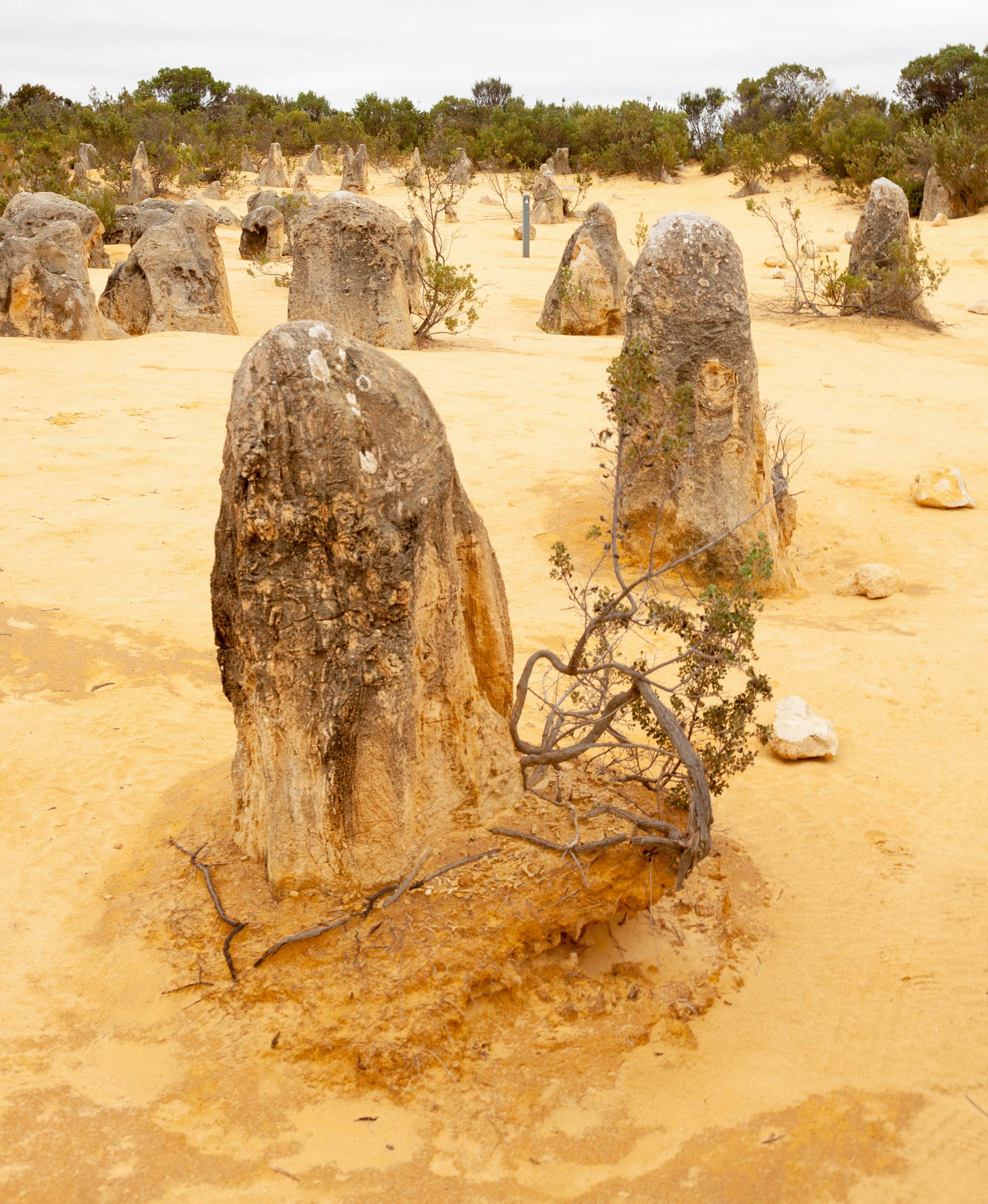 The Pinnacles are limestone formations within Nambung National Park.