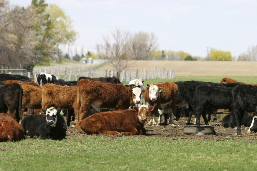 WA beef on the menu for ASX-listed ag player
