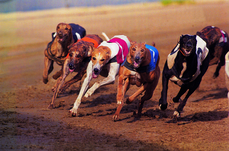 FKN YAY: NSW Just Outlawed Greyhound Racing After Damning Inquiry