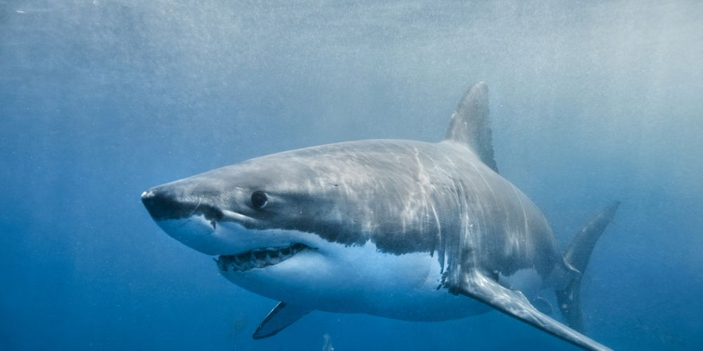 Heartbreak as shark kills 17-year-old girl
