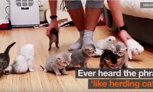 National Kids and Pets Day – Photographer tries herding kittens for family photo