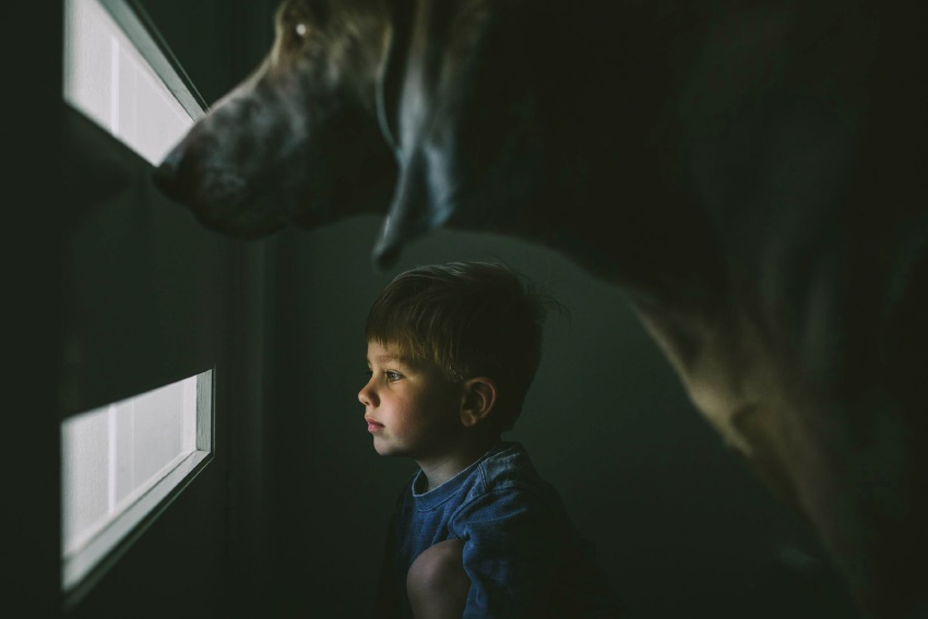 Krystle Ricci's photos of her son Theo and Weimaraner George.