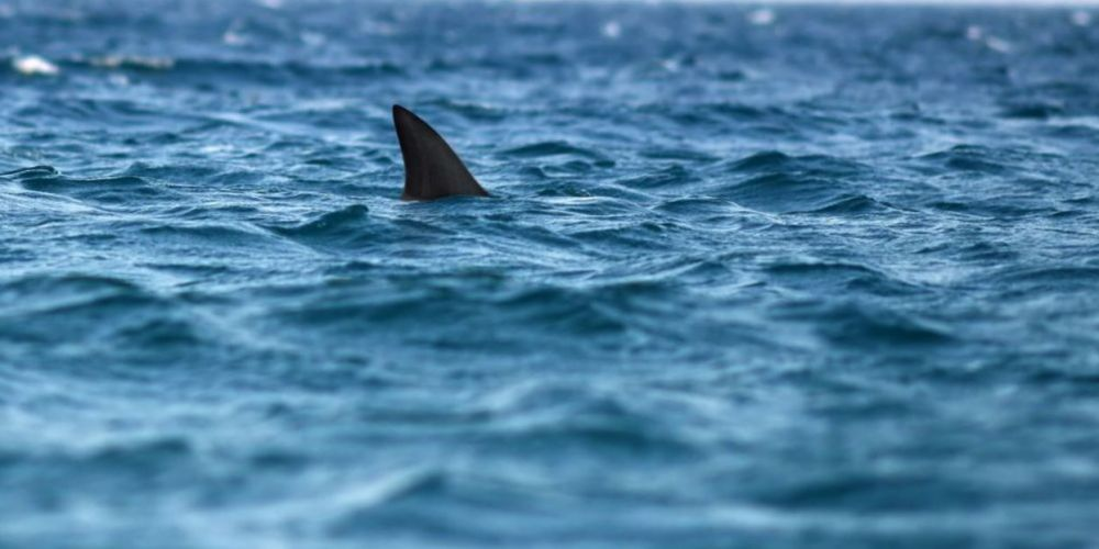 Surf Life Saving reports shark sighting south of Mandurah