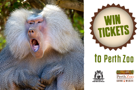 Win 1 of 85 Perth Zoo family passes