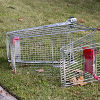 Abandoned trolleys continue to blight our streets.