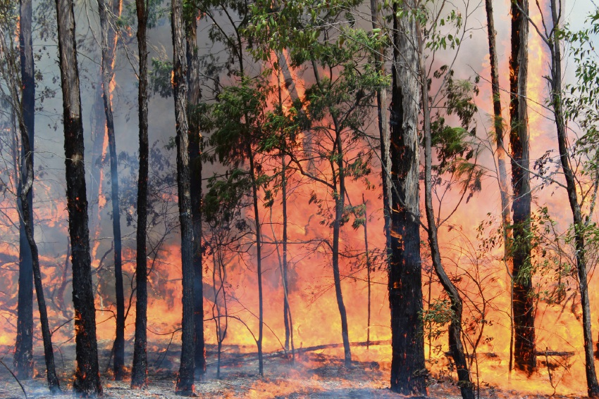 Make your garden bushfire ready.