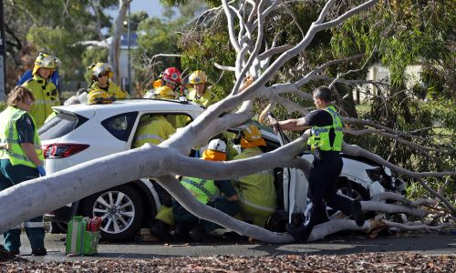 Emergency services work to save a man and woman from a car crushed by a fallen tree. Picture: Martin Kennealey.