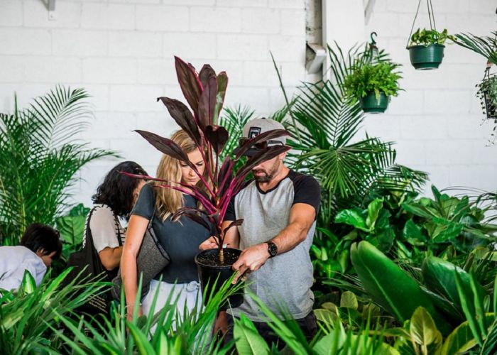 The Jungle Collective plant sale. Photo credit: Mooikin