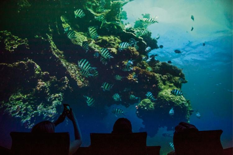 Dive into Ningaloo Reef on 180-degree cinema screen at WA Maritime Museum