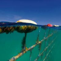 Quinns Beach shark barrier. Picture: Global Marine Enclosures