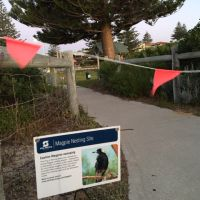 Magpie warning sign at Trigg's Clarko Reserve. Photo: Justin Bianchini