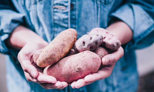 Potatoes a healthy powerhouse for every day