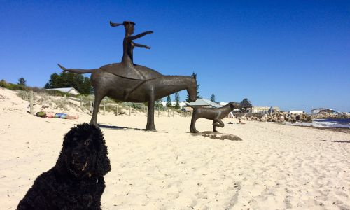 Kidogo Arthouse owner Joanna Robertson's dog Jinja at the beach.