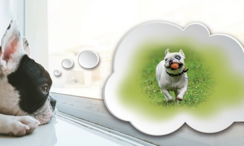 Give your pet independence with Just Pet Doors
