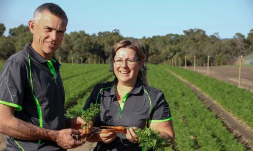 Gingin Organics Noel and Lynda Harding. Picture supplied
