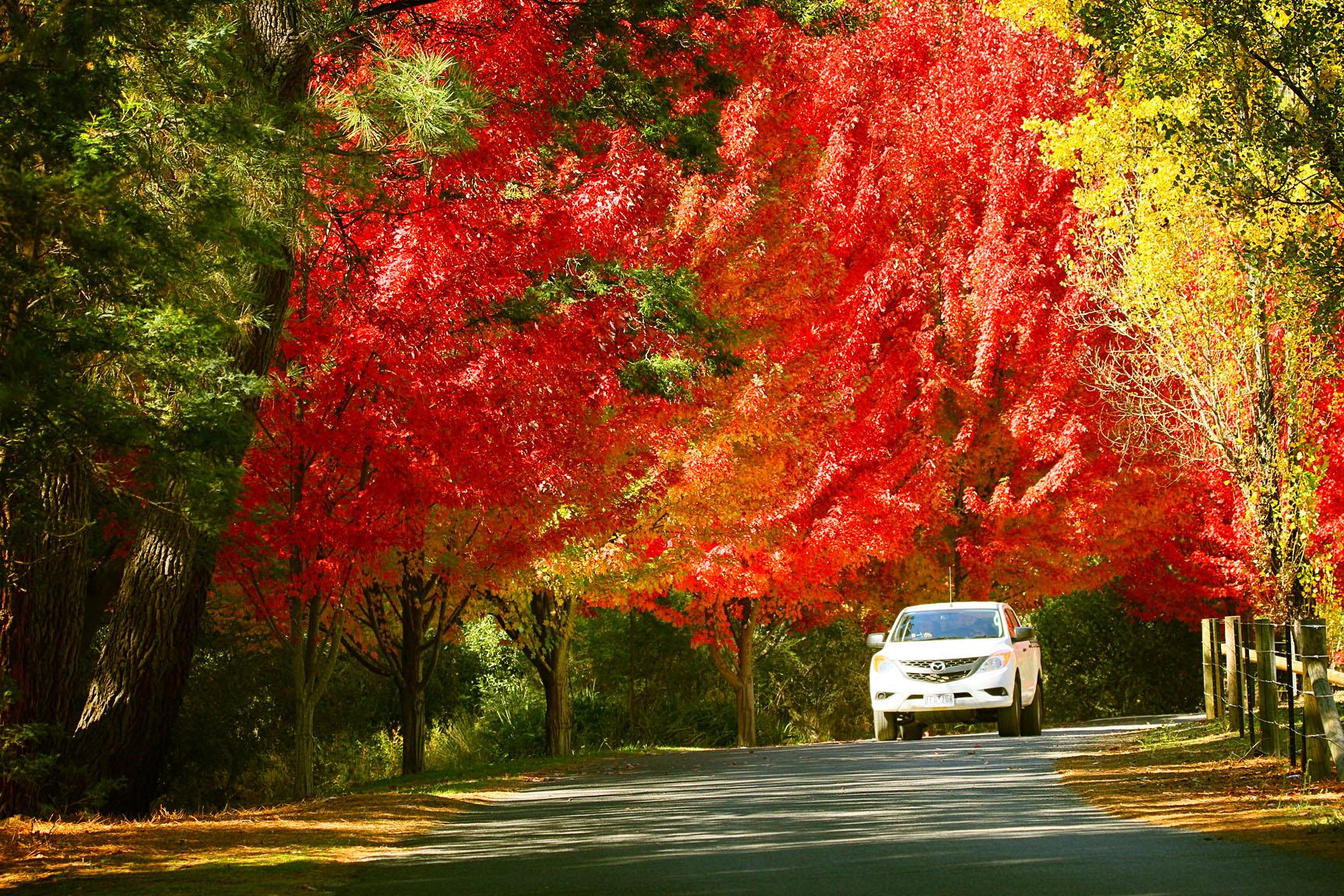 21f4428948852 Top Ten Autumn Trees on the Border
