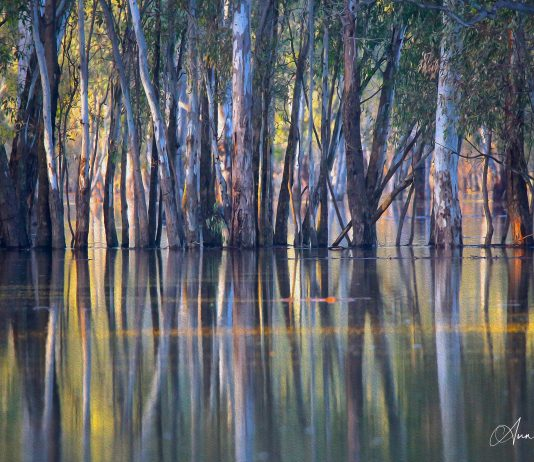 Ann Killeen's prize winner photo 'floodways'