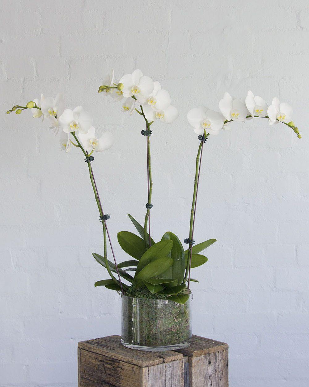 Orchids-Medium-Cover