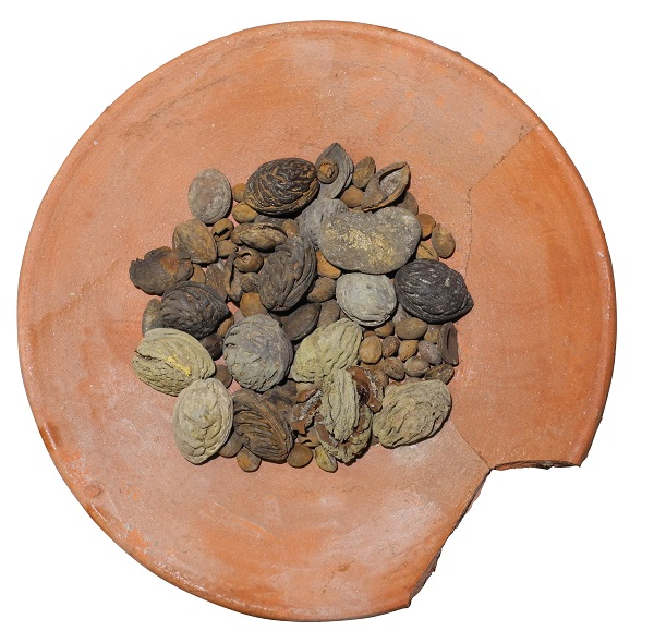 Plate found with fruit seeds from the Roman port of Ostia, 4th century AD.