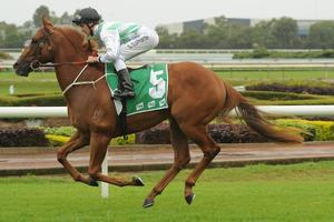 Picture of race horse: Boss Lane