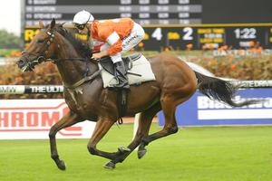 Picture of race horse: Who Shot Thebarman