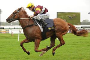 Picture of race horse: Zin Zan Eddie