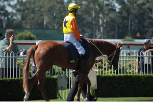 Picture of race horse: Kudero