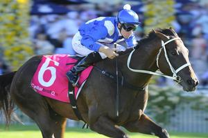 Picture of race horse: Winx