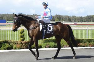 Picture of race horse: Snippets Land