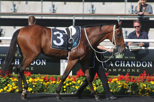 Picture of race horse: Doukhan