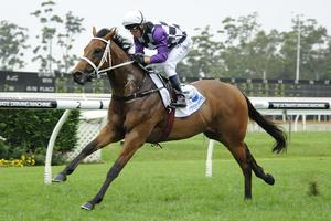 Picture of race horse: Invinzabeel
