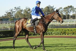 Picture of race horse: Alegria