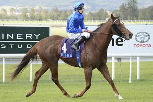 Picture of race horse: Careless