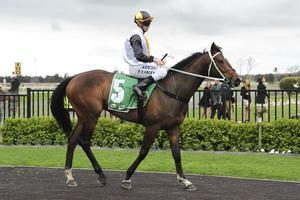 Picture of race horse: Marenostro