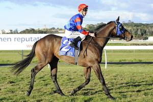 Picture of race horse: Francesco