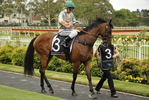 Picture of race horse: Get On the Grange