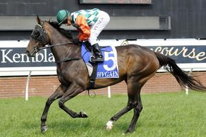 Picture of race horse: Kellyville Flyer
