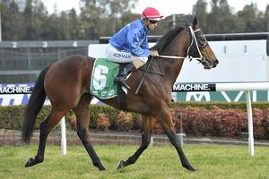 Picture of race horse: Raido