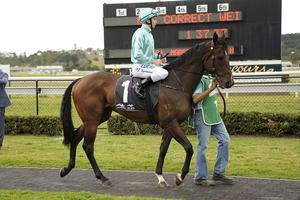 Picture of race horse: Cabeza de Vaca