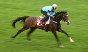 Picture of race horse: Libran