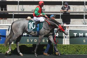 Picture of race horse: Balmain Boy