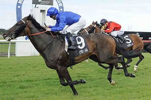 Picture of race horse: Moher