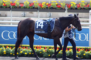 Picture of race horse: Dream Lane